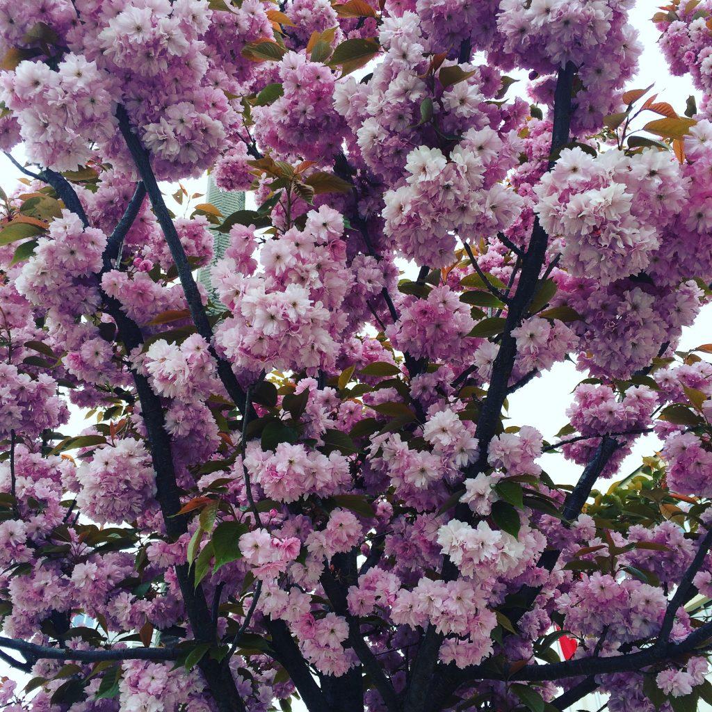 kwiaty na drzewie instagram