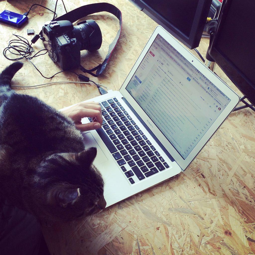Podsumowanie roku 2017 - Kot na klawiaturze