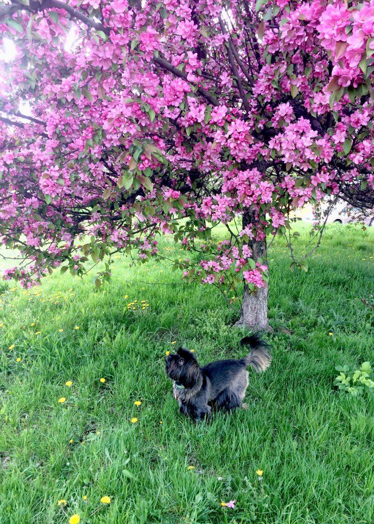 wiosenne kwiaty na drzewie w temacie zero waste